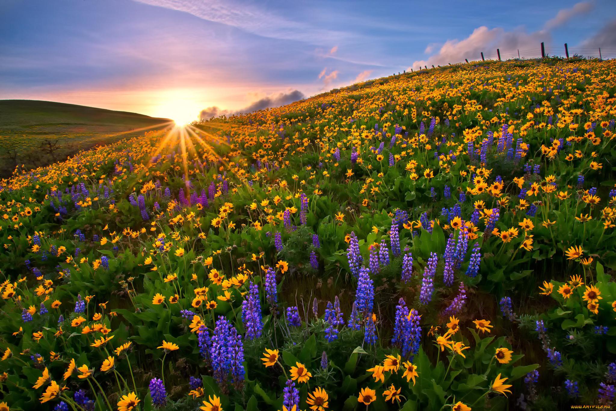 Картинки полян с цветами
